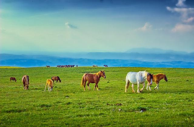 koně na pastvině.jpg