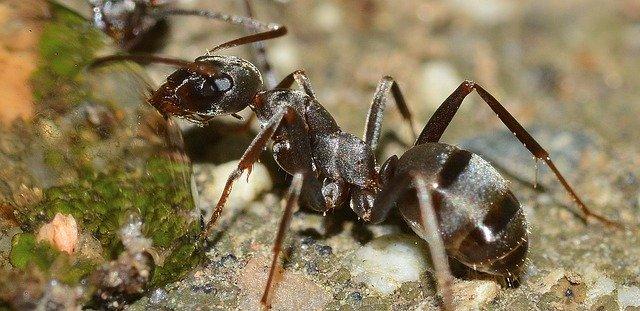 mravenec v přírodě